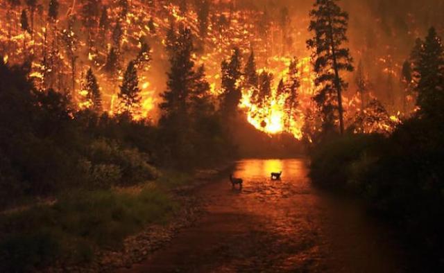 deer-in-burning-forest