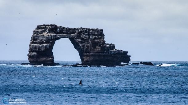 orca-gal-1