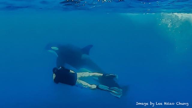 orcas-gal-11