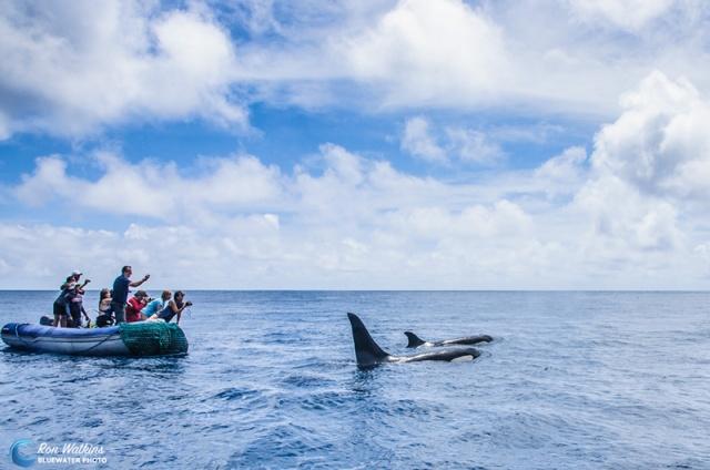 orcas-gal-4