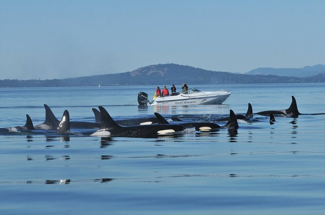 orcas in 2010