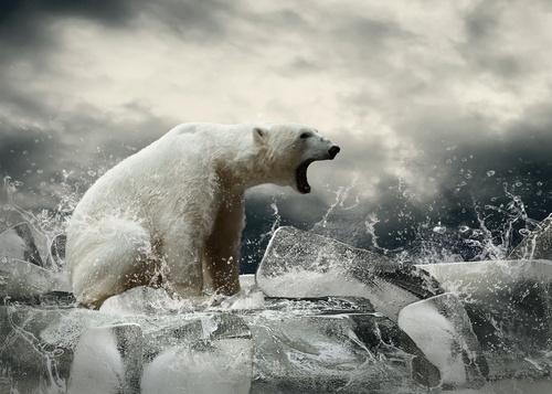 polar-bear-counter-punch